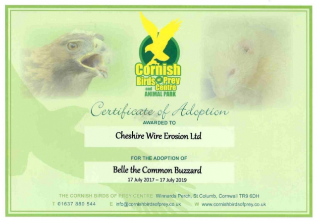 Certificate of Adoption - Belle the Common Buzzard